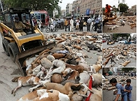 karachi-authorities-poison-over-700-stray-dogs-outrage-continues