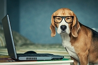 hilarious-videos-of-dogs-being-tech-savvy