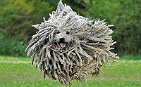 5-funniest-looking-dog-breeds-in-the-world