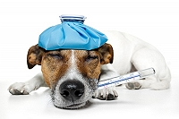 15-dog-breeds-that-have-veterinarians-worried