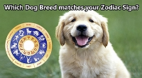 which-dog-breed-matches-your-zodiac-sign-find-the-breed-matching-your-personality