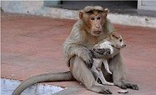 Monkey Shows Love by Adopting a Puppy on..
