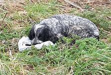 Poor Spaniel Dog Dumped On The Roadside ..