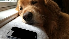 What If Your Dog Could Text With You? Tr..