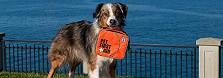 The Ultimate First Aid Kit For Your Pet,..