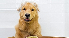 Here is Why Your Dog Hates to Bathe, Tho..