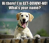 7 funny things that only a pet parent wo..