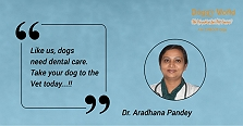 Dr. Aradhana Pandey, The Lady Behind The..