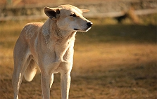 A Letter From The Heart Of A Stray Dog (..