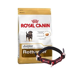 Royal Canin Rottweiler Junior - 3 Kg With Ergocomfort Dog Collar Small-Red