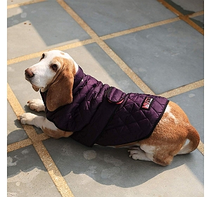 Mutt Of Course Bomber Jacket Purple - 5XLarge