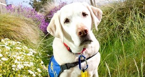 8 Amazing Dog World Records Set By Brave Furr..