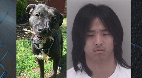 Pet-sitter arrested for beating dog to death ..