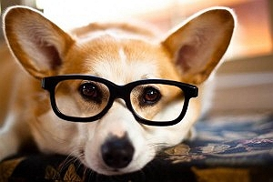 11 Weird Facts About Dogs