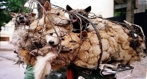Horrors of The Yulin Dog Meat Festival