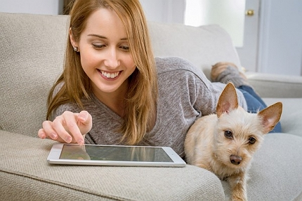 7 Guidelines And Instructions Your Dog Is Bor..