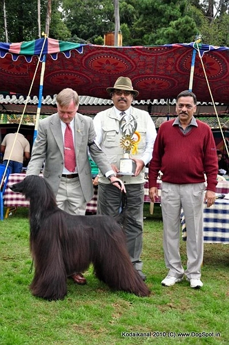 Afghan Hound,Best In Show,Lineup, image