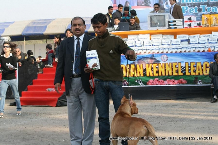 All Breed Championship Dog Show,Pit Bull Terrier, image