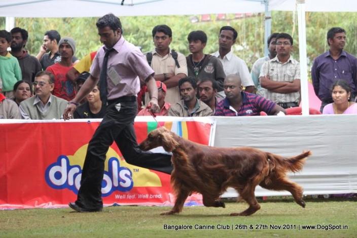 Bangalore Canine Club 2011, Bangalore Canine Club 2011