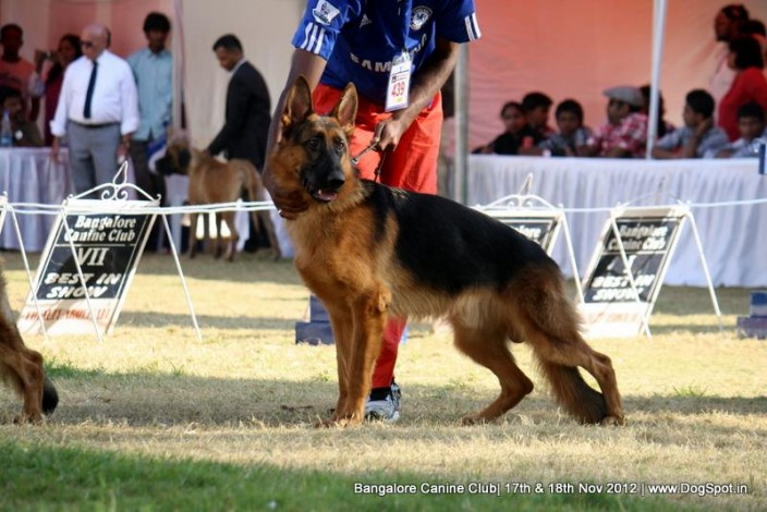 German Shepherd Purina Westminster Dog Show