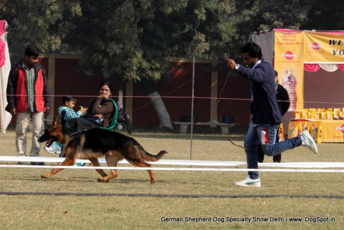 Dog Breeds And Prices In Delhi