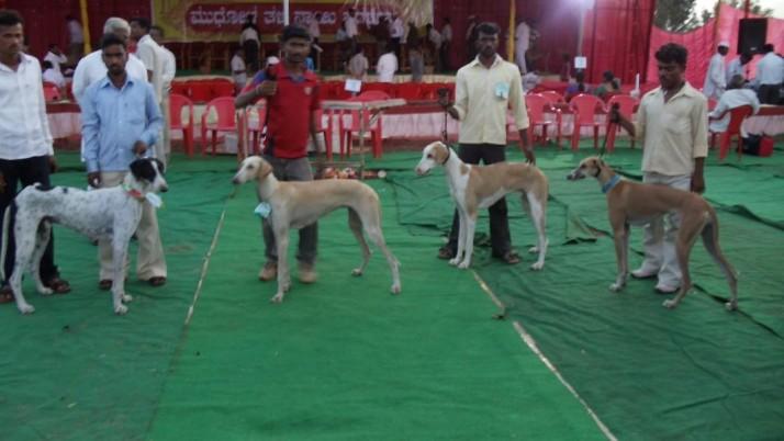 Mudhol Hound Dog Show Mudhol Hound Dog Show Photos