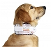 Inno Cervical Collar For Dog Size -8