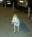 Buster's Happy Tails - First Adoption via DogSpot.in