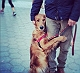 Meet Louboutina, Golden Retriever who gives free hugs to people!