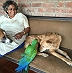 This Woman Is A Mother To 350 Abandoned Animals