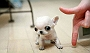 10 tiniest teacup dogs that would make you go aww