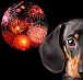 SILENT FIREWORKS IN THIS ITALIAN TOWN TO BRING RELIEF TO ANIMALS