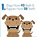 Is your pooch dental fit?