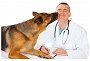 Happy World Veterinarians Day!