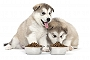 Preservative Vital Part Of Dry Dog Food