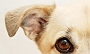How to take care of your Dog�s ears