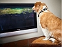 Leaving Your Dog Alone At Home? Don't Worry Dog TV Is Here!