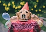 6 Ways You Can Celebrate Your Pet's