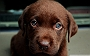 Why You Can't Resist Your Dog's Puppy Eyes? Here's The Reason Why!