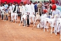 Mudhol Hounds Top Dogs in Indian Dog Breeds Speciality Show