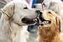 Mumbai Housing Society Refunds Fee Charged To Dog Owners