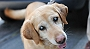 4 Steps To Help You Prevent Cataract In Dogs | Dogspot.in