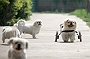 Prosthetics Bring a New Lease Of Life For Differently Abled Dogs