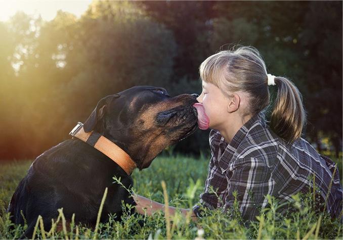Rottweiler Dog Breed Information Dogspot In