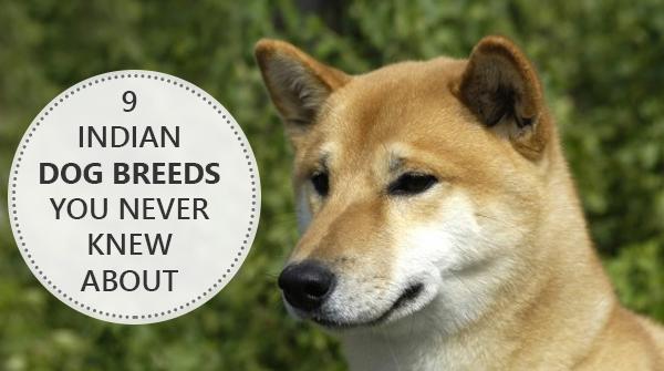 Indie Dog Names
