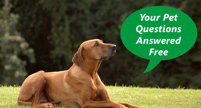 Pet Question & Answer Forum | Ask Dogs, Cats and Small Pets Related