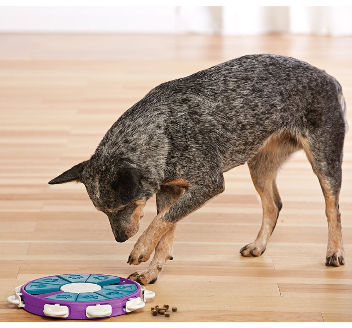 Outward Hound Nina Ottosson Dog Twister Puzzle