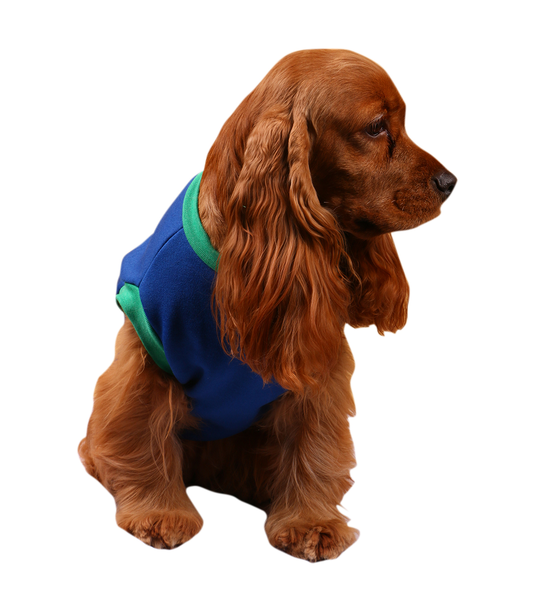 DogSpot Need A poochi Winter T-Shirt Size - 14