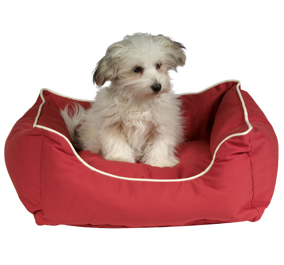 Dog Gone Smart Lounger Bed Red Lxw 32x28 Inch
