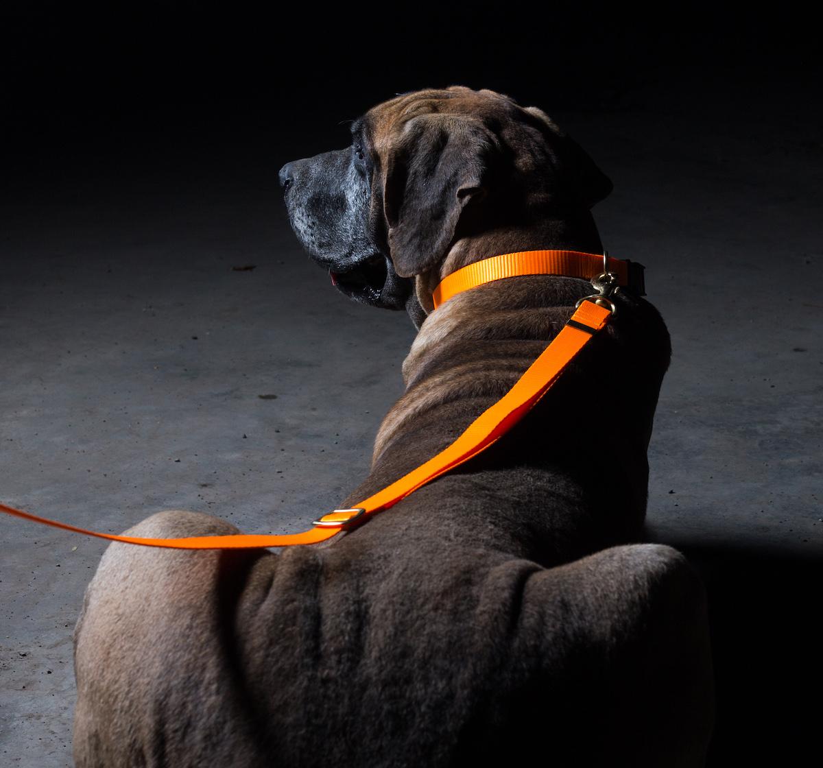 Forfurs Adjustable Classic Dog Collar Neon Orange - large